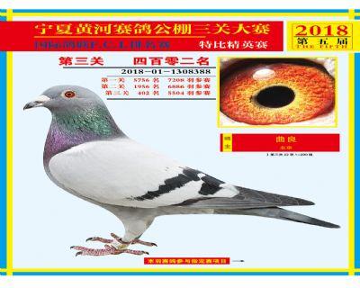宁夏黄河决赛402名