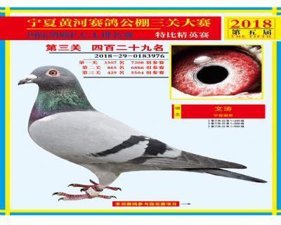 宁夏黄河决赛429名