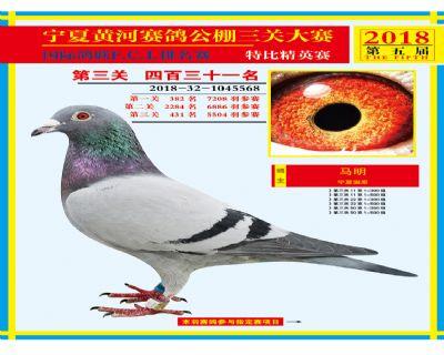 宁夏黄河决赛431名