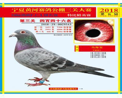 宁夏黄河决赛446名