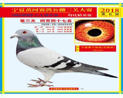 宁夏黄河决赛447名