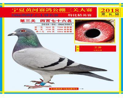宁夏黄河决赛476名