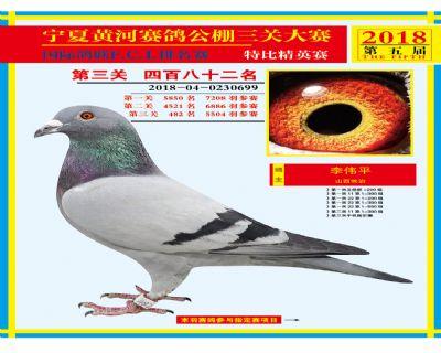 宁夏黄河决赛482名
