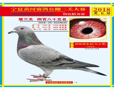 宁夏黄河决赛485名