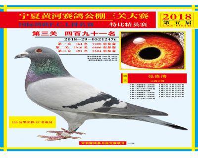宁夏黄河决赛491名