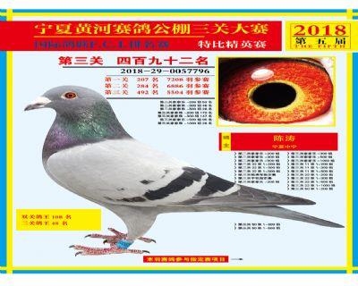 宁夏黄河决赛492名