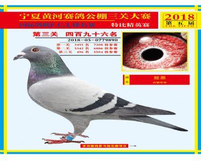 宁夏黄河决赛496名