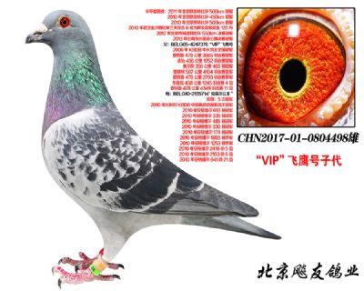 【VIP飞鹰】X【克莱尔公主】直子498!