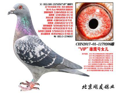 KBDB全国冠军【VIP雄鹰】直女208