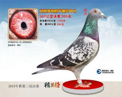 安徽鹏宇决赛305名