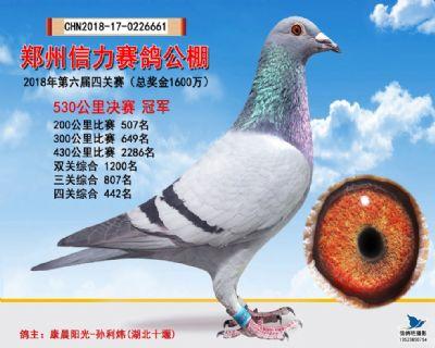 郑州信力决赛冠军