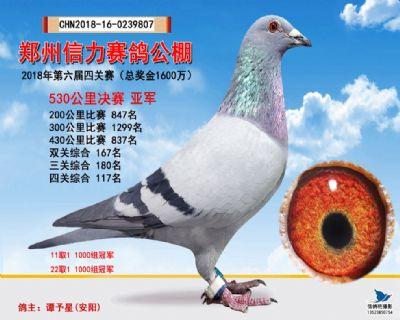 郑州信力决赛亚军