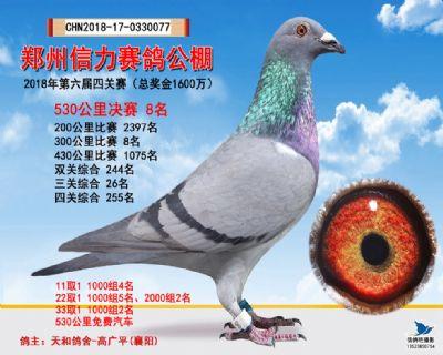 郑州信力决赛8名