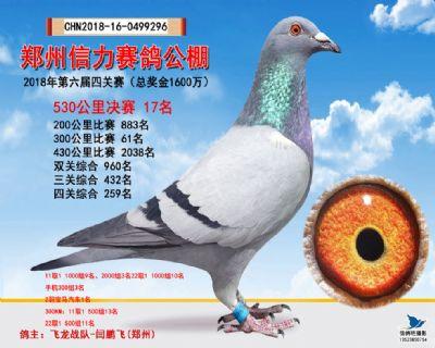 郑州信力决赛17名