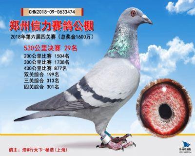 郑州信力决赛29名