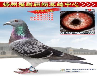 福联翱翔决赛冠军
