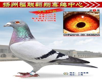 福联翱翔决赛19名