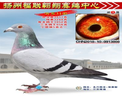 福联翱翔决赛31名