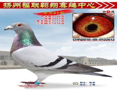 福联翱翔决赛61名