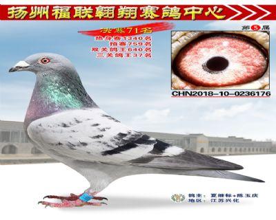 福联翱翔决赛71名