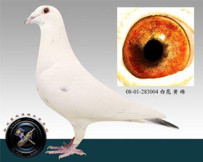 08-01-283004 白花 黄 雌