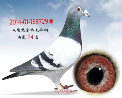(庞立新交)北京侨友公棚决赛114名