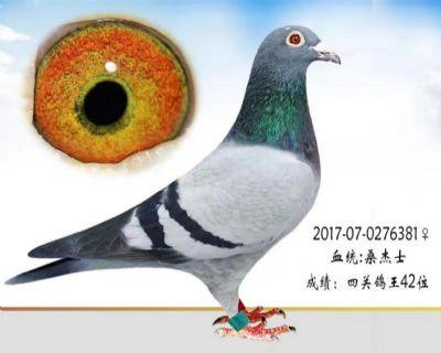 云鼎俱乐部鸽王42位