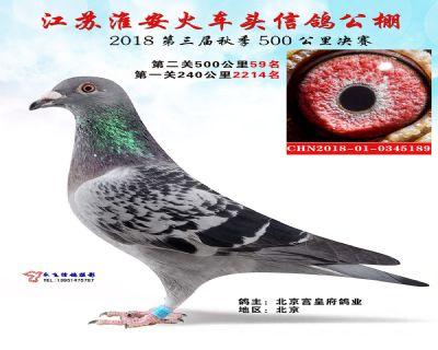 淮安火车头公棚决赛59名