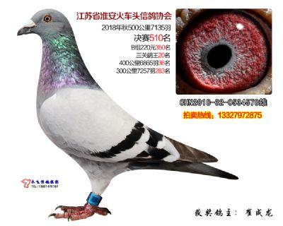 淮安火车头鸽协三关鸽王20名