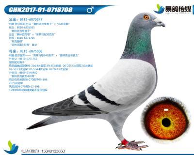 利奥-奥林匹克先生708