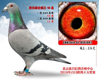 王红光10马利斯圭多血系参考雄