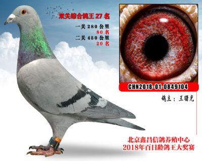 王曙光27波西瓦X凡龙参考雌