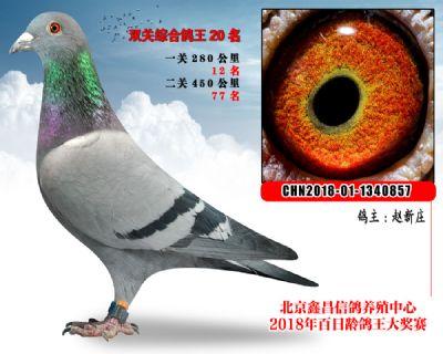 赵新庄20麦克斯血系参考雌
