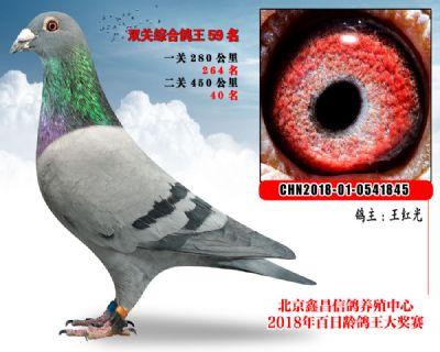 王红光59卡普豪斯第4代参考雄
