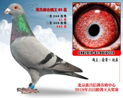 徐箭+赵磊61范德瓦尔乳酪家族参考雄