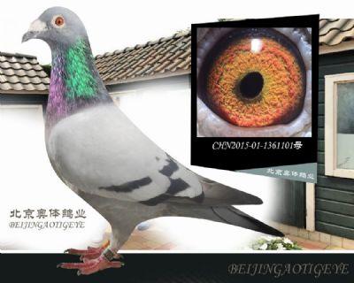 凡龙-超级73-101
