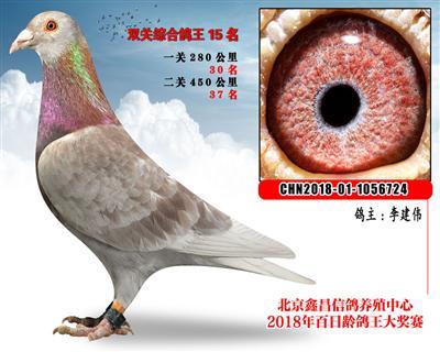 李建伟15詹森红狐X北京李学宝VIP参考雄