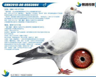 噶斯顿-魅影小子084
