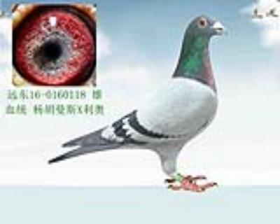 杨胡曼斯X利奥