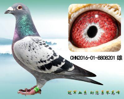 重点推荐  杨欧瓦克483 超级种雄