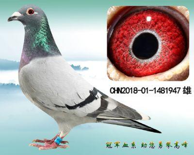 紫罗兰 杨欧瓦克483 特留种雄
