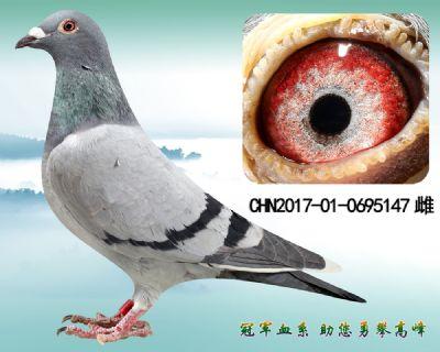 杨欧瓦克483 近亲