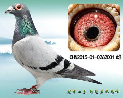 杨欧瓦克483 近血