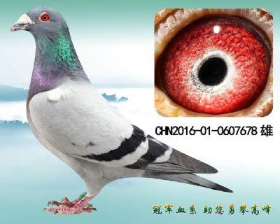 杨欧瓦克483 原环子代