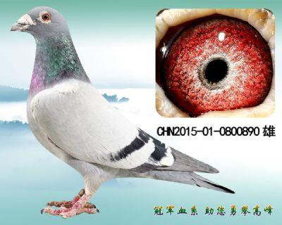 杨欧瓦克483 近亲回血