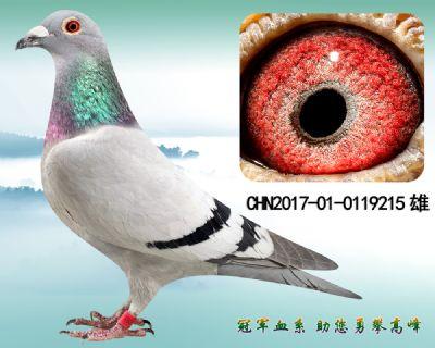 杨欧瓦克483 冠军直子
