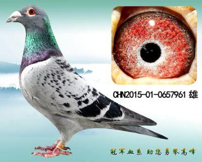 杨欧瓦克483