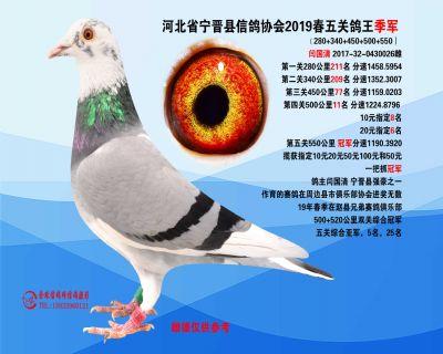 2019年春季五关鸽王季军