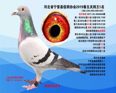 2019年春季五关鸽王5名
