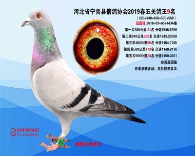 2019年春季五关鸽王9名